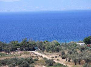 Οικόπεδο προς πώληση Θάσος Σκάλα Σωτήρος 7.724 τ.μ. Υπόγειο