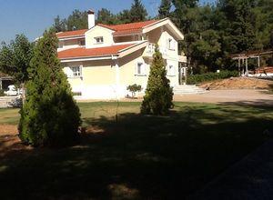 Rent, Villa, Elaiones (Pylea)
