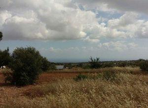 Land Plot for sale Souni 26,000 m<sup>2</sup>