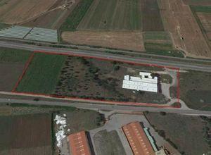 其它房地产 出售 Elaionas (Thiva) 4,200 平方米