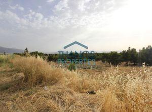 Land Plot, Kefalari