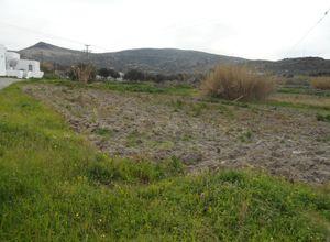 Οικόπεδο, Απολλώνια