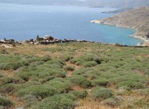 Sale, Land Plot, Chora (Andros)